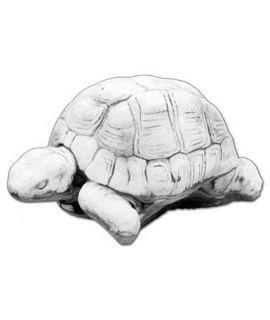Żółw średni