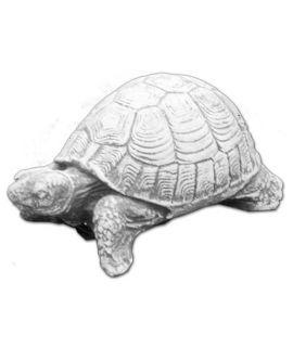 Żółw stepowy mniejszy
