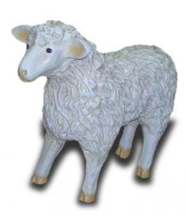 Owca stojąca