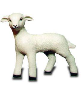Owieczka średnia