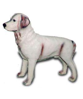 Labrador stojący