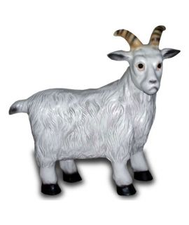 Forma kozy