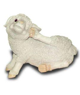 Owieczka drapiąca się