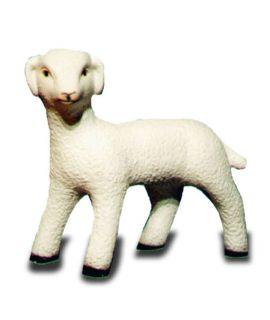 Młoda owieczka