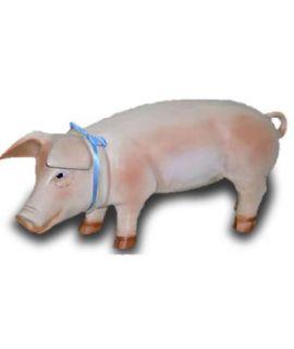 Mała świnia